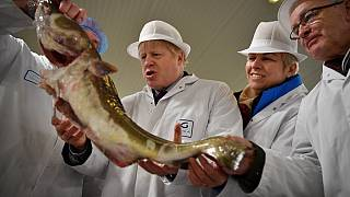 Britain's Prime Minister Boris Johnson poses holding a cod during a general election campagin visit to Grimsby Fish Market in northeast England.