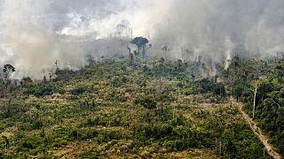 View of a burnt area in the Amazon rainforest, near Porto Velho, Rondonia state, Brazil