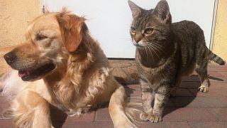 القطط والكلاب لا تنقل عدوى فيروس كورونا القاتل لكن قد تصاب به