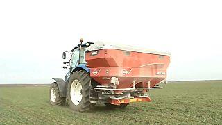 El campo rumano se seca