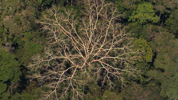 Légi felvétel egy esőerdőről az Amazonas-medencében lévő a brazíliai Porto Velho közelében 2019. augusztus 23-án