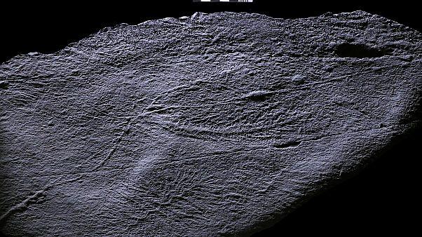 Newfoundland, Kanada açıklarında bulunan rangeomorf fosilleri