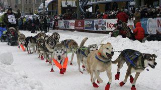 Elrajtolt a világ legkeményebb kutyaszánversenye