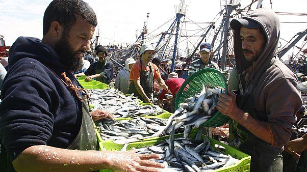 شاهد: المغرب أكبر مصدر لأسماك السردين المعلب في العالم
