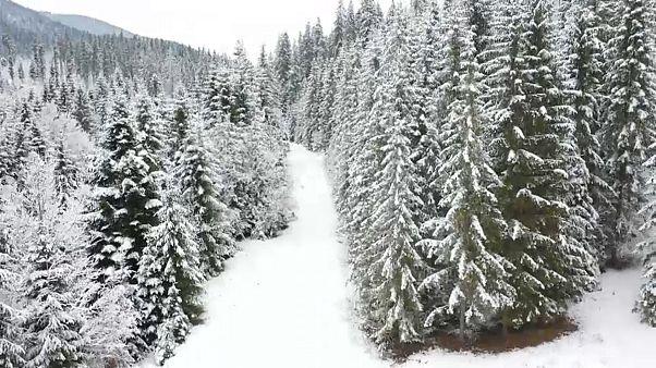 Romania: la mafia del legno