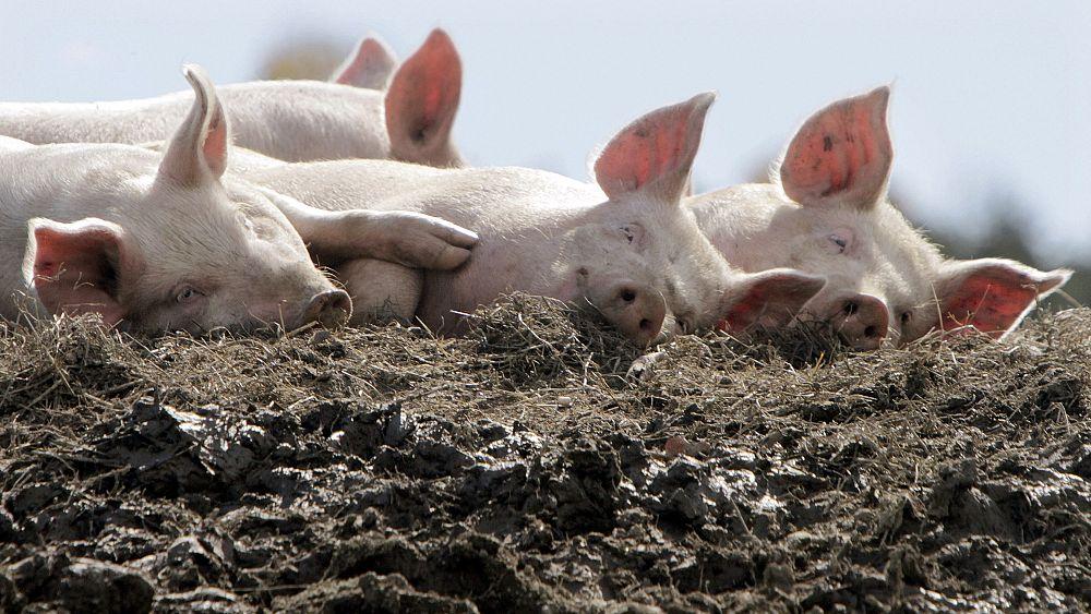 """El consumo de carne de la UE """"debería caer un 71%"""" para ayudar a combatir el cambio climático 1"""