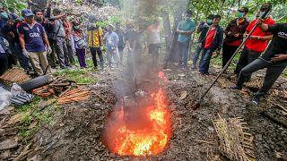 Endonezya'da koronavirüs salgınına yönelik önlemler çerçevesinde yüzlerce yarasa itlaf edildi