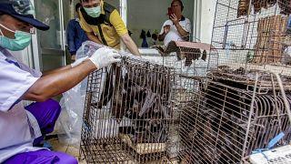 Endonezya'daki canlı hayvan pazarından bir kare, 14 Mart 2020