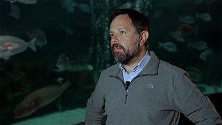 "Centro Helénico de Investigación Marina: ""Los ecosistemas marinos están amenazados a nivel mundial"""