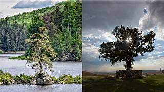 Tens of thousands voted for their favourite in Tree of the year 2020