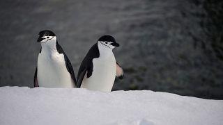 """شاهد: جولة """"حصرية"""" لبطريقين بحديقة أسماك مغقلة بسبب كورونا"""