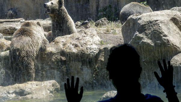 فيروس كورونا يجبر حديقة حيوانات في إيطاليا إلى توجيه نداء استغاثة