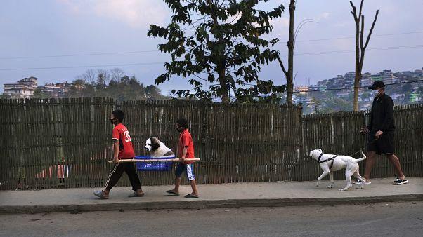 Выгул собаки как средство избежать карантина
