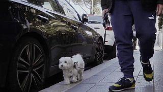 """Portas de Itália abrem-se aos cães e aos hábitos de uma vida """"normal"""""""