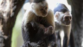 حديقة الحيوانات في الإكوادور