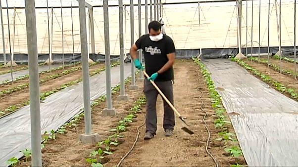 Probleme bei der Ernte: Landwirte klagen über Personalnot
