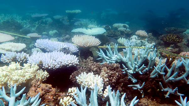 A mass bleaching event of coral on Australia's Great Barrier Reef has occurred again in 2020
