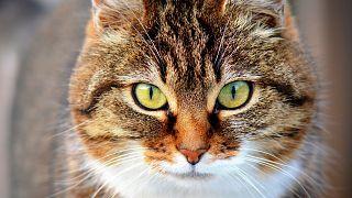 Katze - Symbolbild