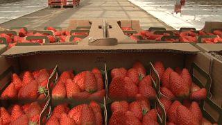 Keep what you sow: Fruit growers struggling amid coronavirus lockdown