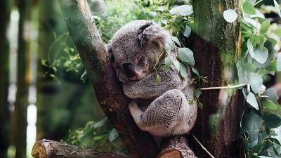 Hope for animals threatened with extinction by Australian bushfire devastation