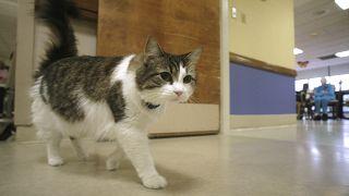 دراسة: القطط قادرة على نقل عدوى كورونا
