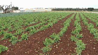 Covid-19: l'agricoltura fatica, l'industria si ripensa