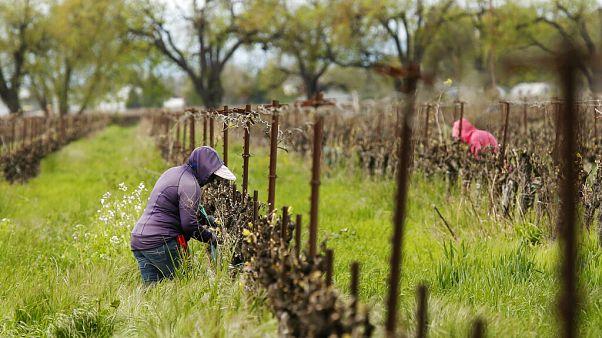 COVID-19: Σε απόγνωση οι αγρότες στην Ευρώπη | Euronews