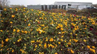 Weggeworfene Blumen in den Niederlanden