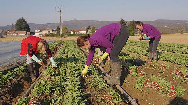 A kelet-európai vendégmunkások hiányától szenvednek a francia gazdálkodók