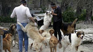 زينب رزوق مديرة جمعية كارما لرعاية الحيوانات. 03/04/2020