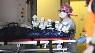 CORONAVIRUS | Sangre de gusanos marinos en lugar de respiradores, el tratamiento que prueba Francia
