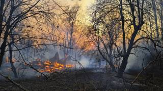 Ukrayna'da Çernobil bölgesinde orman yangınları