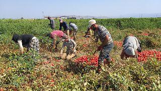 Kalkınma Atölyesi: Koronavirüs salgınıyla mücadelede mevsimlik işçiler de gözetilmeli