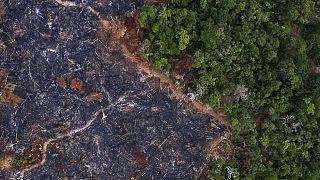 Prainha, Bundesstaat Para, Brasilien: Die Abholzung des Amazonasgebietes hat den schlimmsten Stand seit 11 Jahren erreicht.