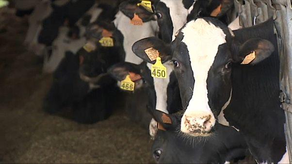 CORONAVIRUS | El sector lechero trabaja a pleno rendimiento durante la cuarentena