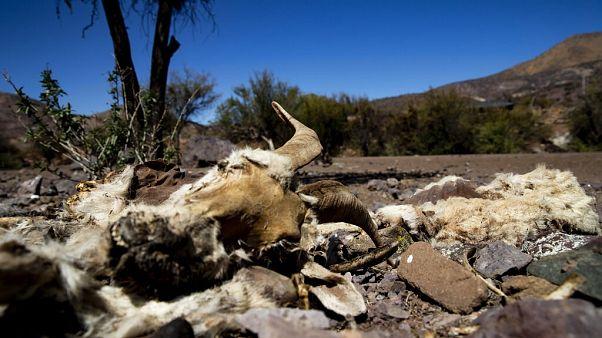 In Chile herrscht seit Monaten Dürre. Dieses Foto stammt von September.