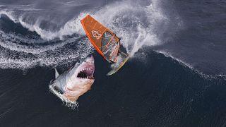 """سمكة قرش تقتل شابا يعمل في """"كوينزلاند بارك"""" في أستراليا"""