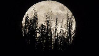 Archivo de la super luna de noviembre de 2016 en Colorado, EEUU