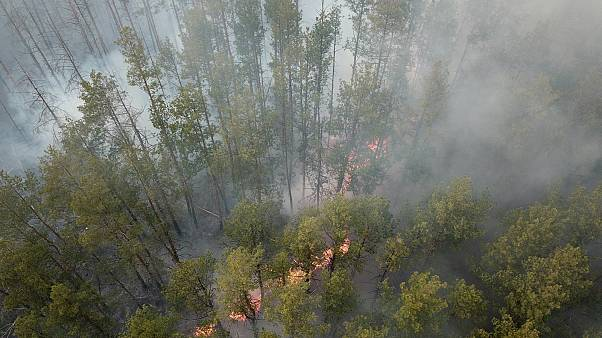 Lángol az erdő április 5-én Volodimirivka mellett, a csernobili övezetben