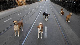 Бездомные животные скучают по прохожим