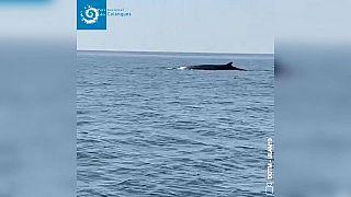 Baleias junto à costa mediterrânica francesa