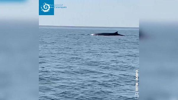 Приплыли: у морских берегов появились киты