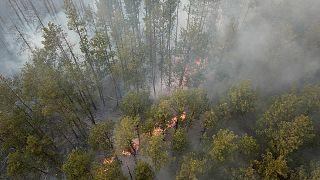Waldbrände bei Tschernobyl gelöscht
