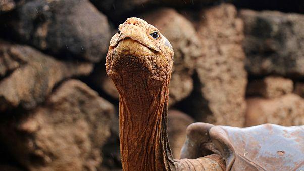Ρώμη: Πρόστιμο σε 60χρονη που έβγαλε βόλτα τη... χελώνα της