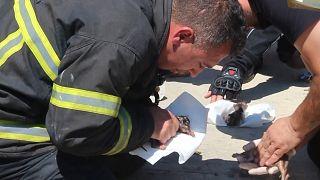 Muğla'da itfaiye erleri yangından etkilenen yavru kedileri suni teneffüsle kurtardı