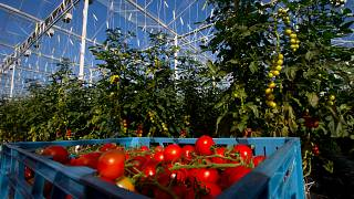 UK food firm charters plane to fly in Romanians to help with harvest