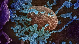 الفيروس ذلك العدو الخفي.. ماهي السبل الكفيلة لتجنيب البشرية أخطاره الداهمة؟