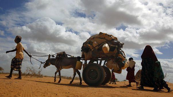 هشدار برنامه جهانی غذا: شمار گرسنگان عالم ممکن است دو برابر شود