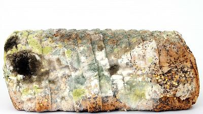 Mouldy bread is food waste
