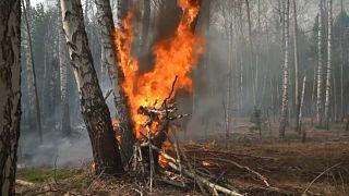 Brennender Baum in Russland